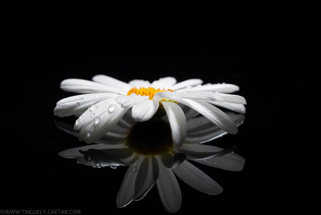 Tinguely, tinguely gaetan photographie, photographie geneve, photographie suisse, macro, tinguely, white, fleurs