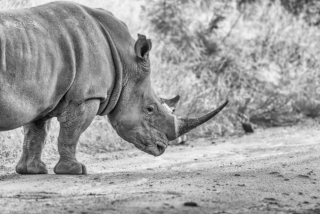 Rhino, Africa,